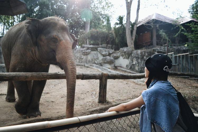 Elephant Women Smiling Friendship Washing Bonding Indian Elephant Zoo Happiness Travel