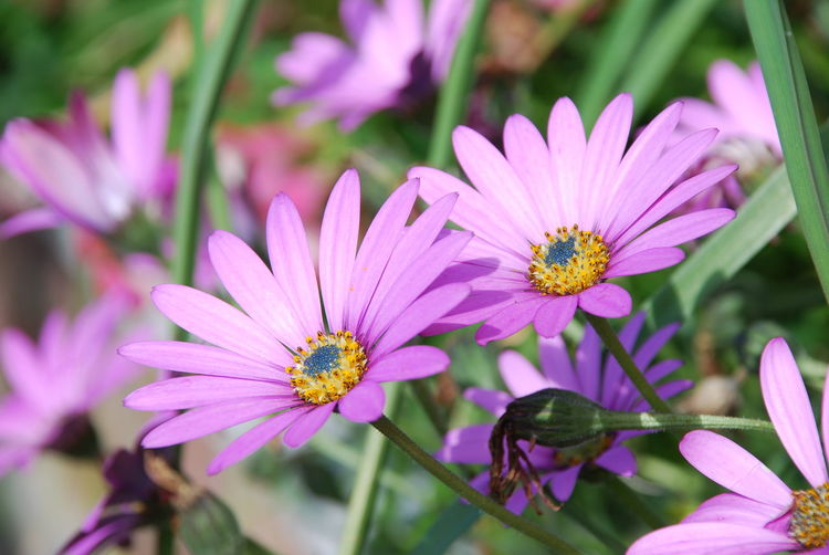 harmony Flower