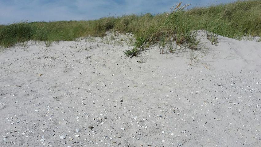 Day Nature Outdoors Sand Sky Beach No People Backgrounds Beauty In Nature Grass Close-up Sand Dune Strand Dune Dünenlandschaft Föhr Seascape Shells Muscheln Muschelschalen Wind North Sea Island Northsea