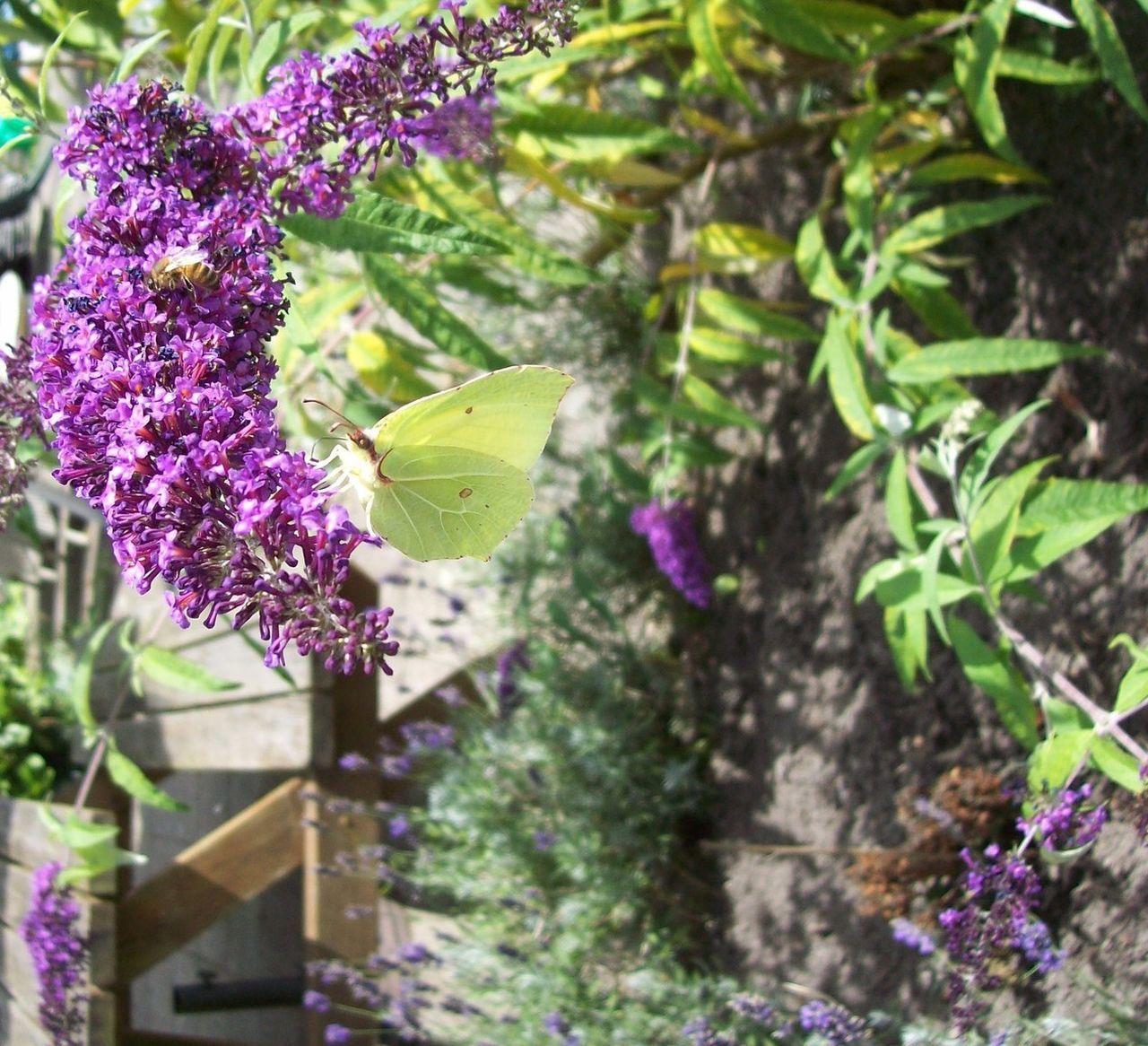growth, purple, plant, nature, no people, outdoors, day, flower, fragility, leaf, beauty in nature, freshness, blooming, close-up
