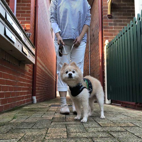 Selfie 🦁 Mammal Pets One Animal Domestic Animals Domestic Vertebrate Canine Whisker