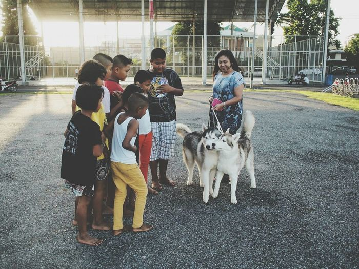 Stand Out From The Crowd Siberian Husky Children Enjoying Life Hanging Out Relaxing