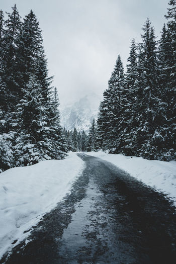 Snow covered street amidst trees against sky