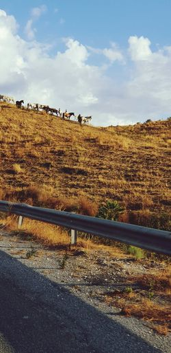 Horse EyeEm Selects Rural Scene Agriculture Sky Cloud - Sky Mountain Road Grazing