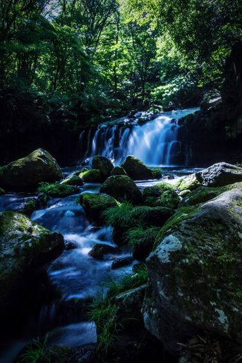 Waterfall Nature Forest Tree Beauty In Nature Scenics River Water Landscape Green Color Tranquil Scene No People Outdoors Day Vacations Freshness Sky 蓼科大滝