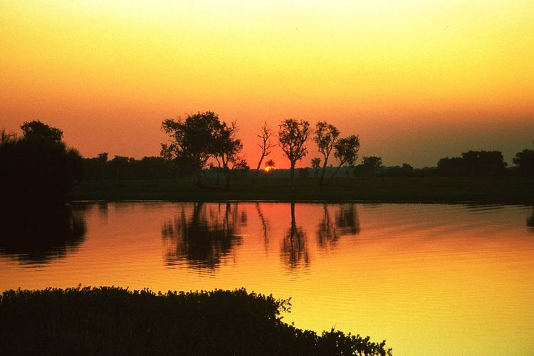 Throwback 1994 (!) Sunrise at Yellow Water River Sunset Orange Color Tree Plant Sky Water Reflection Lake Silhouette Beauty In Nature Tranquility Yellow Outdoors Romantic Sky Growth Nature Scenics - Nature Idyllic Tranquil Scene No People