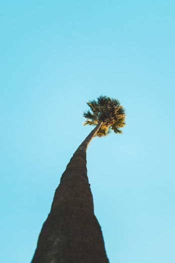 Palm Tree in the blue sky Sky Nature Plant Tree High Above Palm Tree California Palms California Sky Abstract Reaching For The Sky