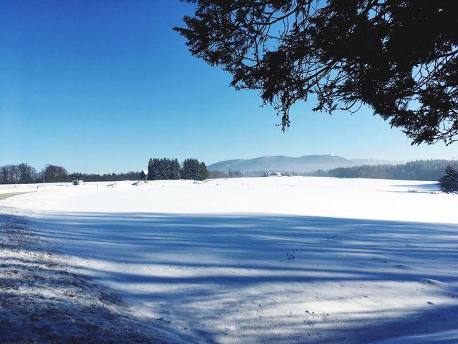 Winter White Snow ❄ Sun Blue Sky White And Blue