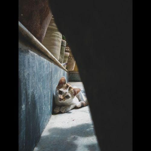 Portrait of a dog cat