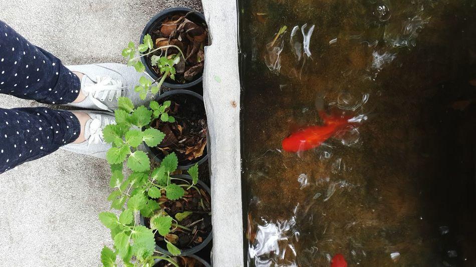 เรา กับ ปลาทอง| Me and Golden fish Somewhereinbangkok