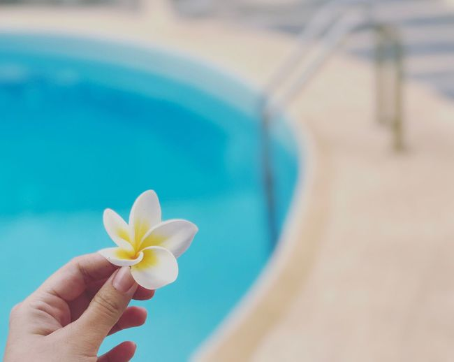 Close-up of woman hand holding flower against swimming pool