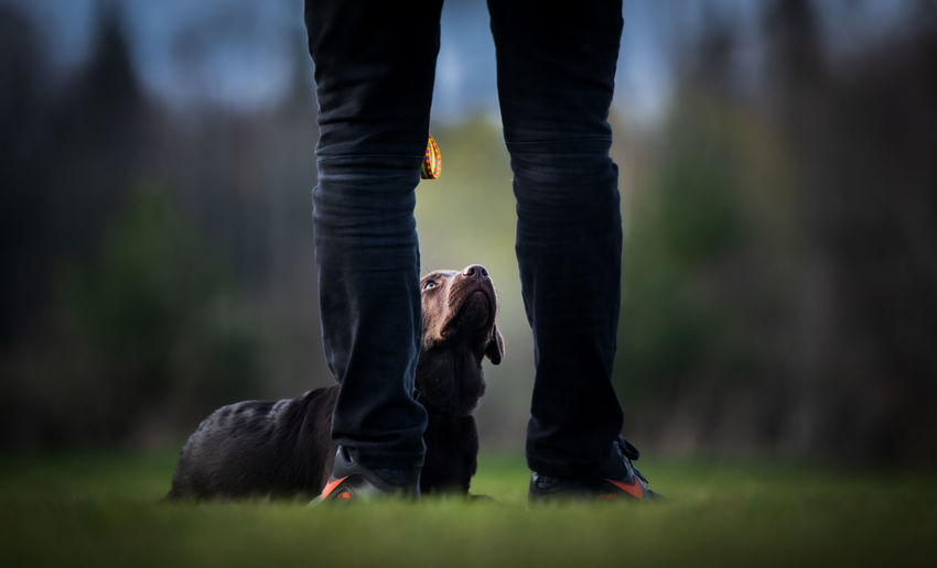 Low section of person standing with dog
