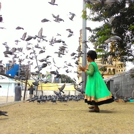 This girl walked right into the pigeons eating millet/wheat and made them fly away. A wave of joy shined on her face and her eyes twinkled seeing the flock of pigeons flying past her again and again as they tried to get back to their places and every time she just shooed them away. Solotrip Hyderabad Firststop Oneday Stop Mecca Masjid In The Backdrop Charminar Girl In Merry Flock Of Pigeons At City Of Pearls Hyderabad India