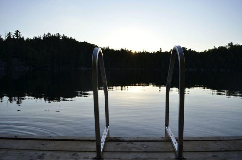 Water Tree Lake Reflection Sky Animal Themes