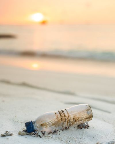 Plastic Pollution. When we destroy the Earth for our pocket gains the Earth will give us time to think. But not for long. Plastic Waste Plastic Bottle Plastic Environment - LIMEX IMAGINE Sea Beach Land Sand Water Animal Sky Scenics - Nature No People Sunset Nature Horizon Over Water My Best Photo