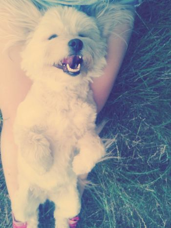 I Love My Dog ♥ Animal Love Enjoying Life Hello World