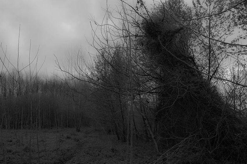 Blackandwhite Bandw Dark Forest Darkness Trees Jungle Rasht 700D