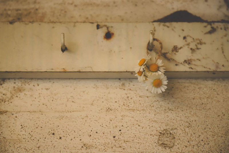 Close-up of white flower on wall