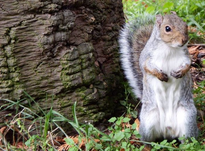 A cute squirrel, what's not to love? Autumn Nature Squirrel Animal Themes Animal Wildlife One Animal Outdoors Photography World