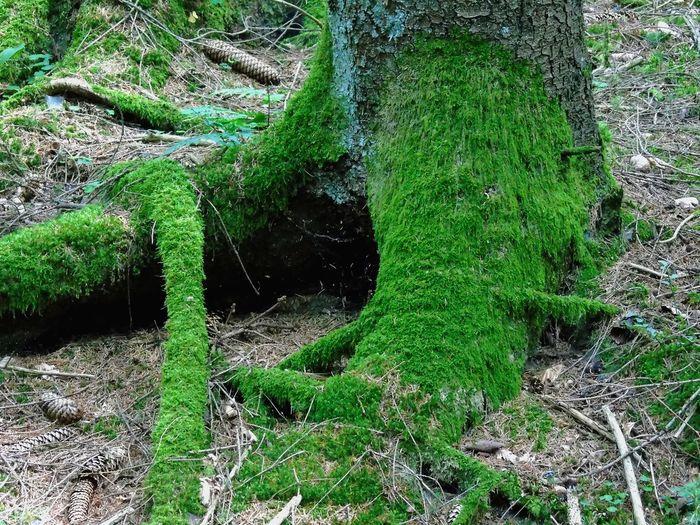 moss coverd