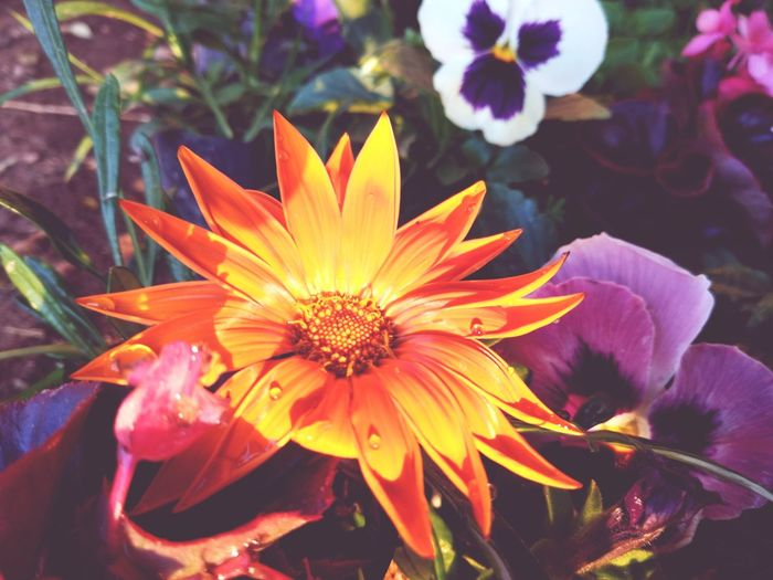 Flower Head Flower Beauty Petal Springtime Close-up Plant In Bloom Blooming Botany