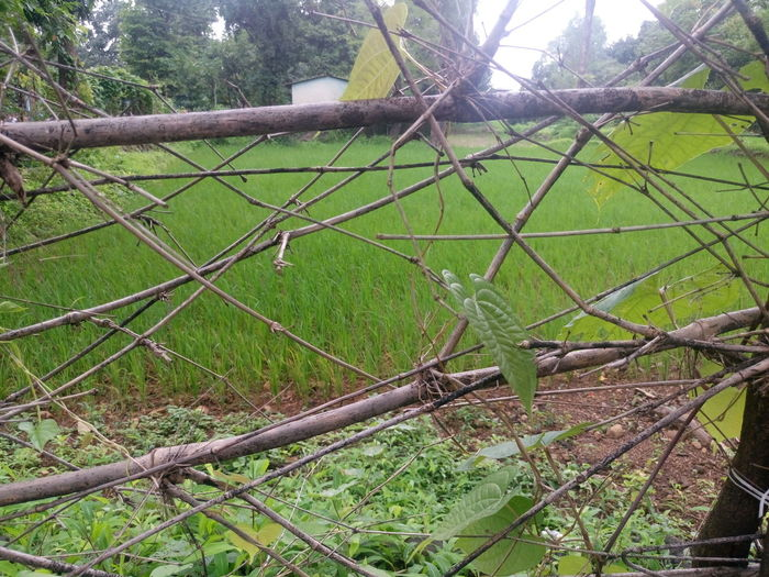 Barbed Wire Boundary Chainlink Chainlink Fence Day Fence Full Frame Green Color Growth Iron - Metal Lush Foliage Nature Outdoors Protection Safety Scenics Security Spiked Tranquil Scene Tree Wire Mesh