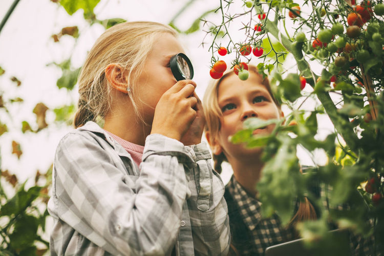 Two beautiful little girls examine small cherry tomatoes through a magnifying glass