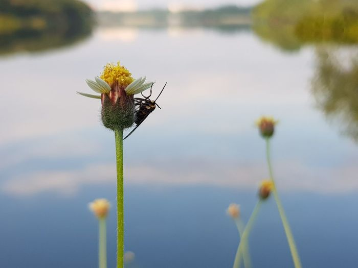 morning scenery Yellow Water Flower Bug Fly Bee Morning Lake Reflection Bokeh Close-up Insect Small