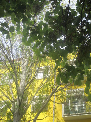 #architecture And Nature #spring Day In The Park Alvalade, Lisbon Architecture Beautiful Colors Beauty In Nature Branch Building And Tree Building Exterior Built Structure Calm Day Freshness Green Color Growth Joyful Colors Leaf Low Angle View Nature No People Old Terrace Outdoors Spring Tree Yellow Building