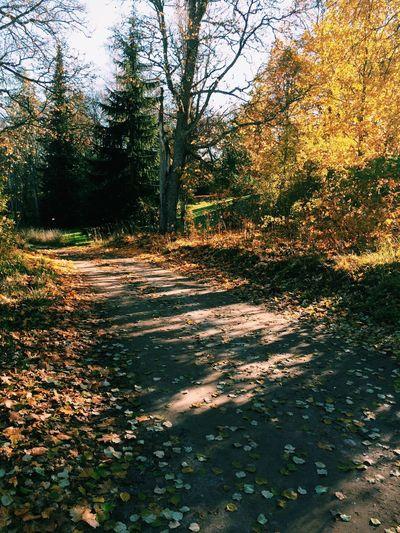 Trees Nature Leaves