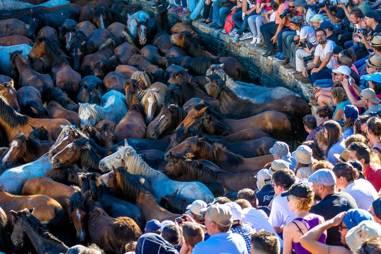 People watching horses