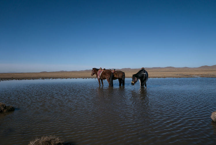 Cloud Day Horses Landscape Mongolia No People Outdoors Pond Riding Sky Steppe Trail Water Lumix Lx100