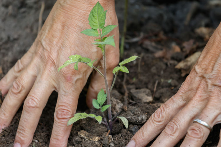 Cropped Image Of Person Planting Seedling On Field