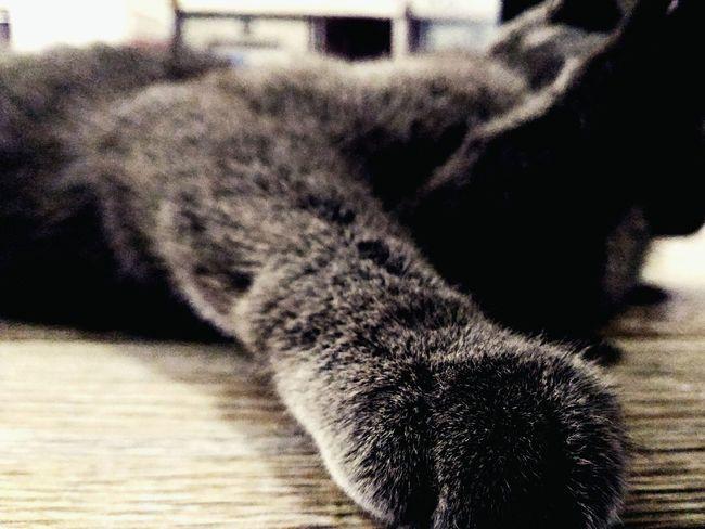 Cat Animal Schottishfold Blue Hands Asus Zenfone Photography Asuszenfone2 Zenfone Photography Night Baku Animal Photography Animal Love Catsagram Catsoftheworld Catstagram Wilde Littlemonster