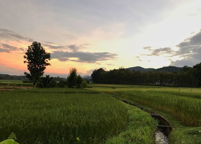 Landscape of Morning Light at Rice Field in Thailand the one of Thailand Agriculture Thailandtravel