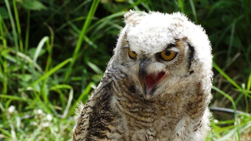 Photo's created at Fantasyval in the Netherlands. Fantasyval Birdofprey Owl Eagle Birds Close-up Animals