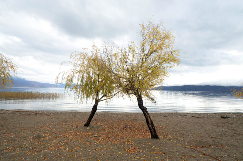 Trees on lakeshore