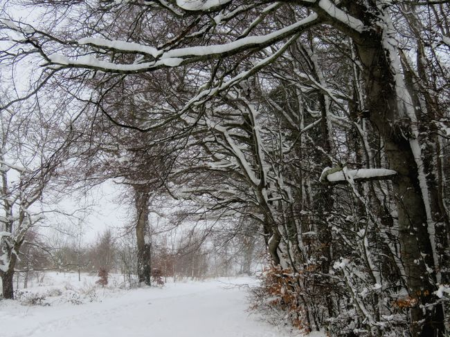 snowy path Out Walking My Dog Light And Shadow Hello World Taking Photos Check This Out The Places I've Been Enjoying Life Enjoying The View Trees And Sky EyeEm 2018 Ireland🍀 Landscape Out Walking In The Snow Cold Temperature Tree Nature Weather No People Beauty In Nature Outdoors Day