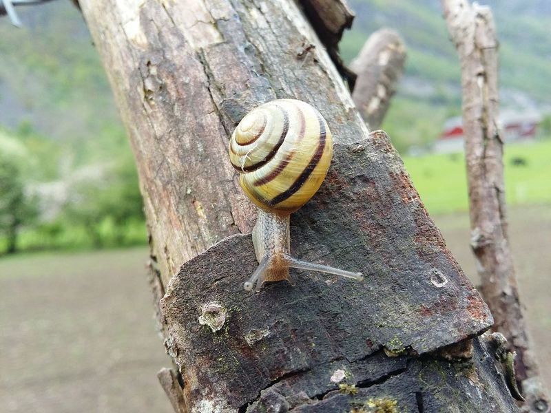 Snail Schnecke Tree Snail Collection Snail🐌 Norway ✌