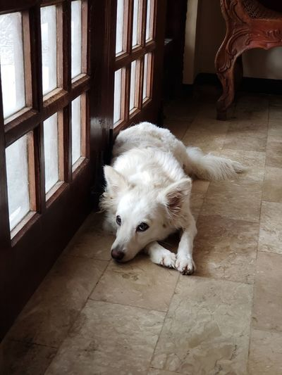 High angle view of dog relaxing on floor at home