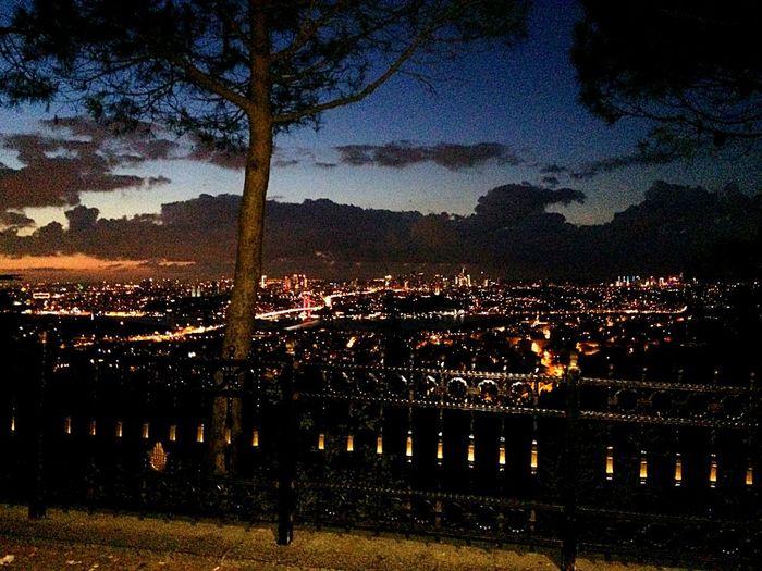 Sky Illuminated Night Nature Tree Plant No People
