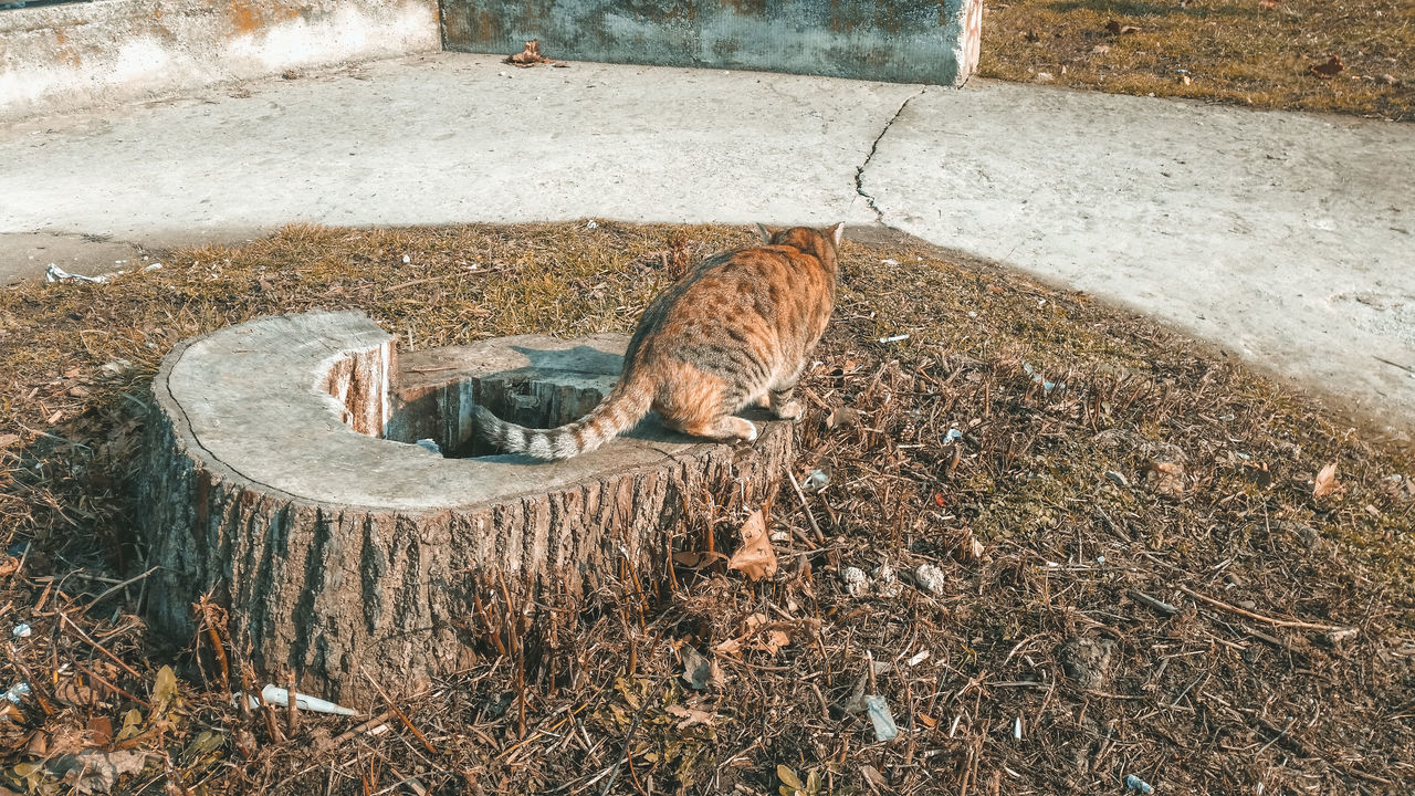 Rear View Of Cat Sitting On Field