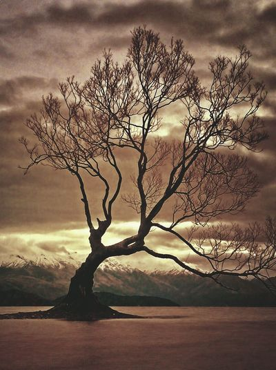 Tree Cloud - Sky Sky Nature Beauty In Nature Tranquility Branch Bare Tree Tranquil Scene Scenics - Nature Outdoors Environment Sunset Landscape No People
