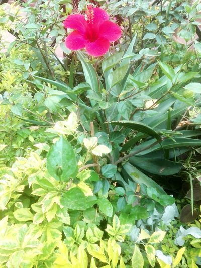 Plant Growth Beauty In Nature Green Color Flowering Plant Flower Nature
