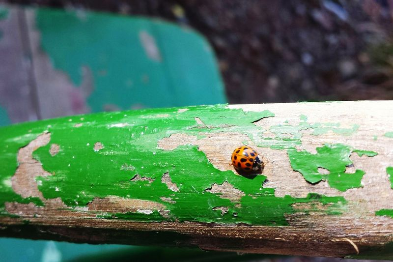 Chair Pealing Paint Paint Insect Green Color Outdoors No People Day Ladybug Close-up Nature Full Length Fragility