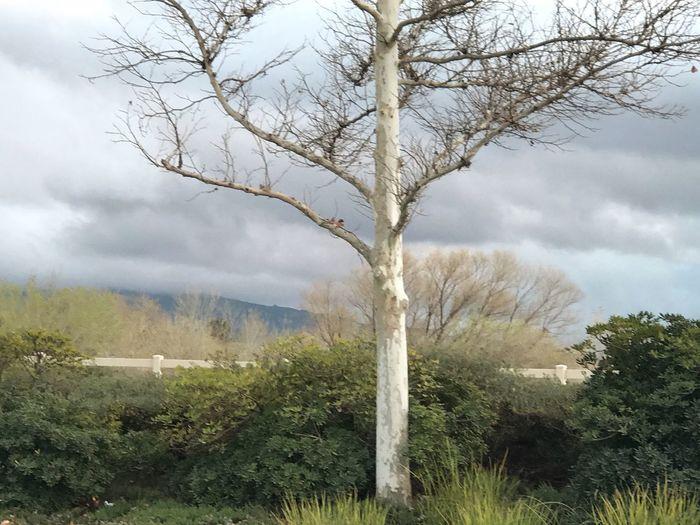 Tree Day Bare