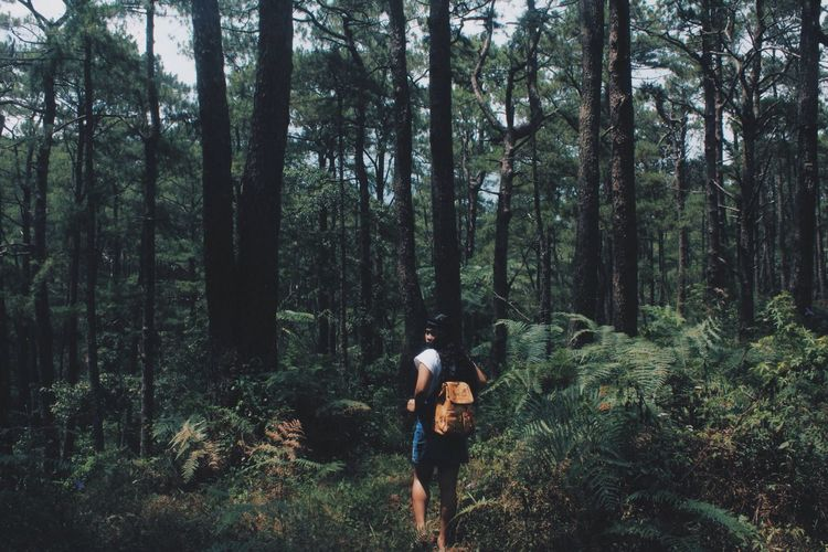 Let's get lost together. Forest Tree Real People Leisure Activity Lifestyles Adventure Nature Hiking Backpack Standing Walking EyeEmNewHere Outdoors Campjohnhay Baguio City EyeEm Best Shots EyeEm Nature Lover Beauty In Nature EyeEm Best Shots - Landscape EyeEmNewHere Live For The Story