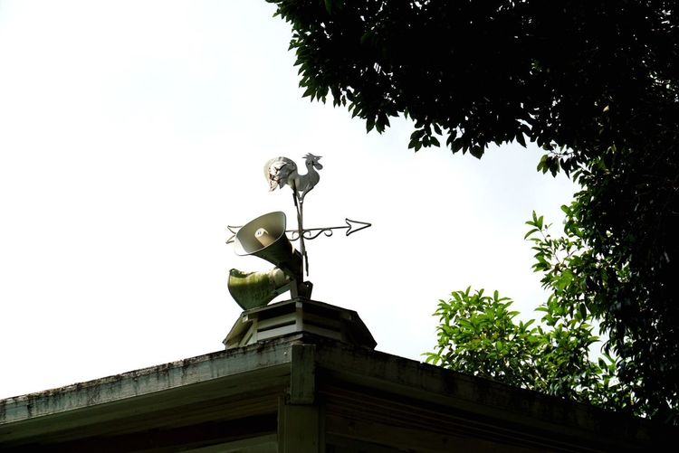 Aerovane 🌬 Sky Low Angle View Tree Plant Architecture Nature Built Structure