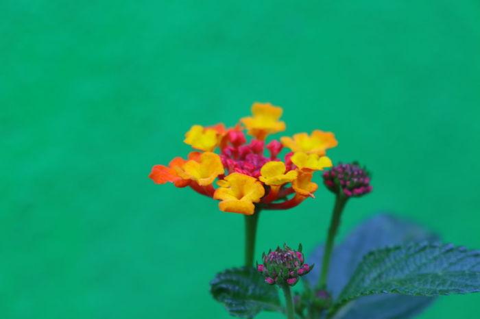 Blackandwhite Flowers Flowers,Plants & Garden Fullcolor Garden Green Color Macro Mexico Plants Color Palette Colour Of Life Color Of Life! Color Of Life