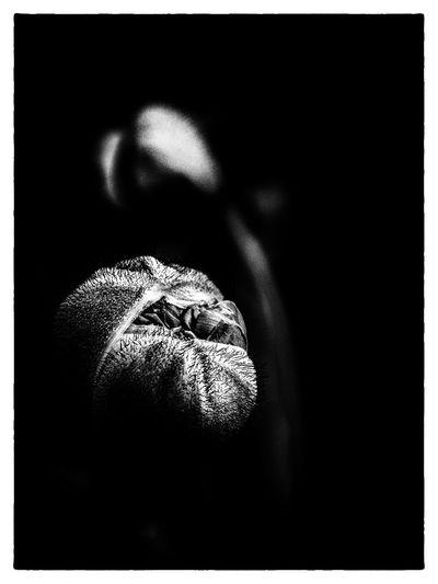 poppy bud close